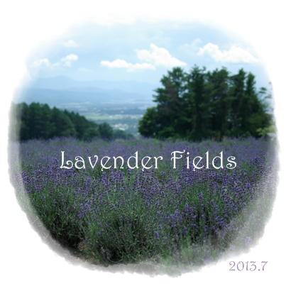 ラベンダー畑.jpg