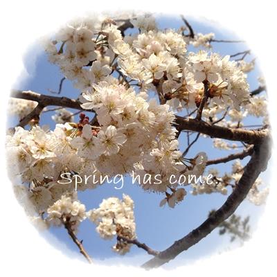 春が来た!.jpg