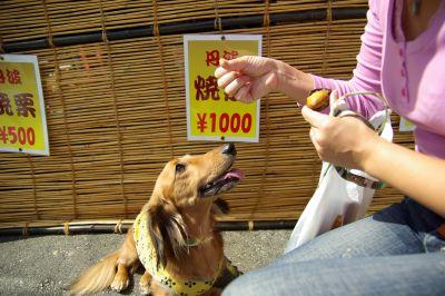 20071006_04秋の味覚だ、栗!.jpg
