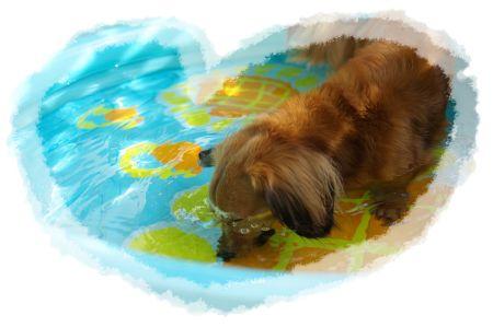 潜水犬!!!.jpg