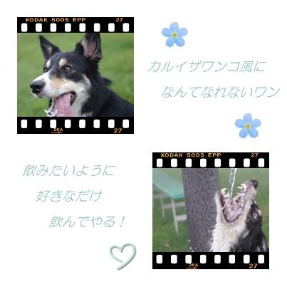 カワイコちゃん2.jpg